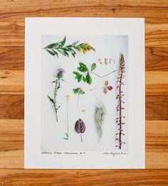 Spruce Park Cabin Taxonomy #9 Photo Print
