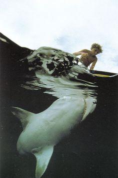 shark approaching surfer boy