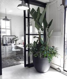 50 awesome tree interior design ideas to apply asap 52 Industrial Interior Design, Office Interior Design, Office Interiors, Industrial Style, Interior Livingroom, Large Plants, Potted Plants, Indoor Plants, Hanging Plants