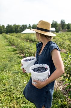 Picking Blueberries in Leelanau County Michigan on the shore of Lake Michigan with The Fresh Exchange.