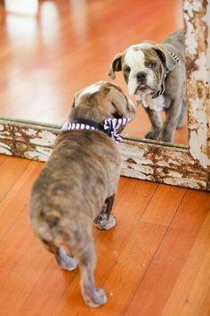 #Bulldog #puppy.