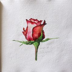 - Great Legacy Roots From Childhood . To Anything Falling In …. Great Legacy Roots From Childhood - Watercolor Rose, Watercolour Painting, Watercolors, Art Floral, Paint And Sip, Learn To Paint, Aesthetic Wallpapers, Art Inspo, Flower Art