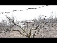 Tăieri facute de specialisti part.3 (2016) - YouTube Snow, Youtube, Outdoor, Outdoors, Outdoor Games, The Great Outdoors, Youtubers, Eyes, Youtube Movies