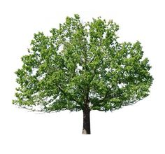 Afbeeldingsresultaat voor bomen overzicht