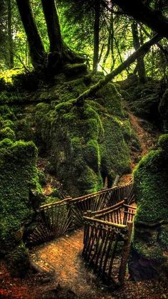 "Puzzlewood by CFynes on Flickr♥¸.•*""""*•.¸❤¸❤ ""♥(✿◠‿◠)˙·٠•●♥❤ ƸӜƷ·.¸¸.·´¯`·.¸¸.♥ ƸӜƷ"