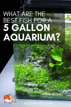 How to stock a 5 gallon aquarium / Aquarium, aquarium ideas, fish for aquarium, … Aquarium Aquascape, Betta Aquarium, Aquarium Stand, Planted Aquarium, 5 Gallon Aquarium, Betta Fish Tank, Nature Aquarium, Fish Tanks, Aquascaping