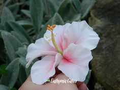 Sugar Gum Flower Paste Pink Hibiscus wedding cake decorations Available in our Etsy shop!
