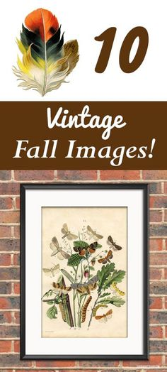 10 Free Vintage Fall Images