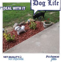 Check out my paw-some photo! Make your own, and you'll be entered to win a $450 prize pack. #petarmorapproved NoPurNec 18+ Ends 8/31/18 Rules: petarmorsweeps.com Gifts For Hunters, Enter To Win, Pets, Check, Life, Animals And Pets