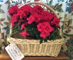 Las cestas de Cestas Home son perfetas también para arreglos florales en interiores. Mira, por ejemplo, esta canastilla con azaleas. Sencilla y muy decorativa.
