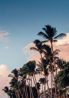 f2dab1988082 68 Best Palm tree pictures images in 2019 | Palm trees, Palm tree ...