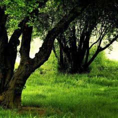 La nature est belle   #Angers #MaineEtLoire #Anjou #PaysDeLaLoire #AngersÉmoi #InstAnjou #jaimelanjou #LoireValley #natureisbeautiful #jaimelafrance #arbre #paysage #trees_captures #atmosphere #treescape #nature_perfection #naturewalk #colorworld #naturegram #arvore #simplephotography #natureart #fz300 #street_photography #fantastic_earth #lovetheworld #fiftyshades_of_nature #main_vision #rsa_trees #nature_wizards by comrs_angers