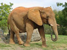 pictures of elephant  (Eadric Mason 2272x1704)