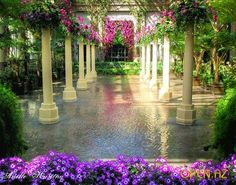 Experience the world of Longwood Gardens . a place to see dazzling displays that elevate the art of horticulture . a place to enjoy performances that inspire! Beautiful Gardens, Beautiful Flowers, Beautiful Places, Garden In The Woods, Home And Garden, Spring Garden, Monuments, Porches, Gardens Of The World