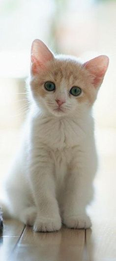 Adorable little cute kitty looking so cute... click on picture to see more by beatriz