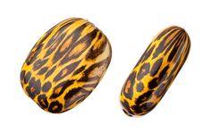 Zebra rounded square plate acrylic beads 22.4x5.8mm at $1.97/50g/24pcspcs, shop plastic beads at Beadingsupplys.com