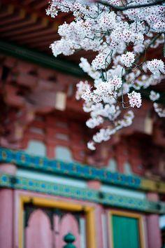 Temple Kiyomizu-dera, Kyoto. One of my favorite temples to visit <3
