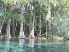Rainbow River, Dunnellon, FL by john-cara pics Florida Springs, Rainbow River, River House, Photography Photos, Travel Destinations, Places To Go, Explore, Adventure, Outdoor Decor