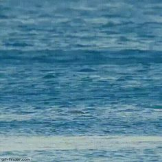 Spinner dolphin | Gif Finder – Find and Share funny animated gifs