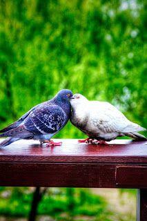 Healing Spells, Magic Spells, Love Spells, White Pigeon, Healing A Broken Heart, Lovers Photos, Friendship Love, Living In Alaska, Outdoor Fun