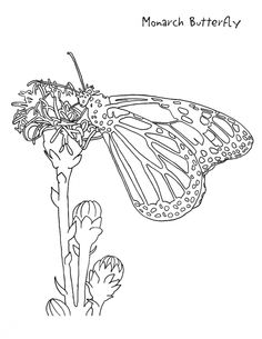 helicopter coloring sheet | things that fly | pinterest | free fun - Rainforest Insects Coloring Pages