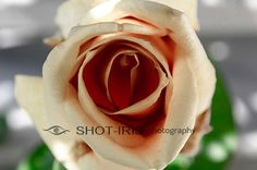 Digital photo download printable file  Flower closeup by Shotiris