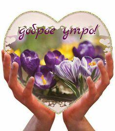 Хорошего настроения! Beautiful Day, Red Roses, Good Morning, Cards, Craft, Pretty Flowers, Nice Asses, Bom Dia, Buen Dia