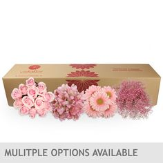 Monochromatic Combo Box- Multiple Color Options Available
