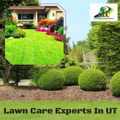 Expert Lawn Care Services In Utah