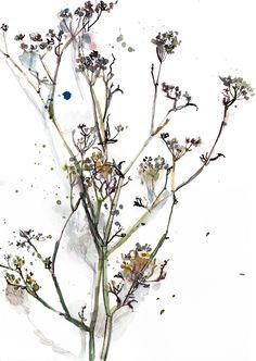 Botanical illustration, Anise Flowers Original Painting