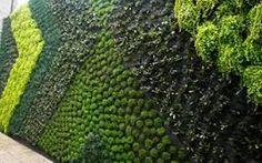 Resultado de imagem para muros verdes