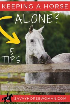 While keeping a horse alone is not ideal, many owners (including myself) have found themselves in a situation where it's the most practical and economical solution. Here's some helpful tips and strategies for keeping a solo horse happy and healthy...