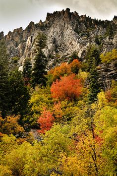 American Fork Canyon. How I miss the mountains and fall color!