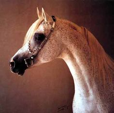 El Shaklan (Shaker El Masri x Estopa) A 1975 Arabian stallion who founded a dynasty of quality Arabians of Spanish and Egyptian bloodlines.