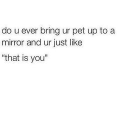 All the time - with my 5 cats and one dog 😂 they give me strange looks lol All Meme, Stupid Funny Memes, Haha Funny, Funny Stuff, Hilarious, Random Stuff, Real Quotes, Mood Quotes, Witty Quotes