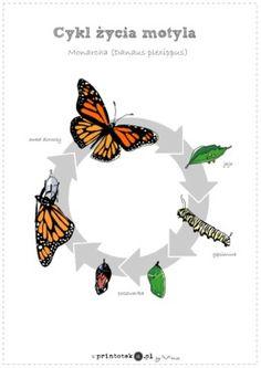 Cykl życia motyla - Printoteka.pl