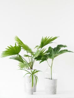 Swedish design blog Monsters Circus created these little planters by putting glass vessels in wet concrete. Whether you use them for greenery or flowers, they're a beautiful addition to any space. Find more details at Monsters Circus »   - HouseBeautiful.com
