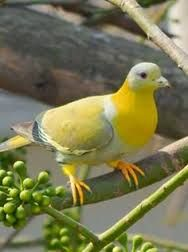 Image result for Colorful pigeon