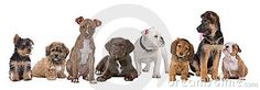 Large group of puppies Stock Photo