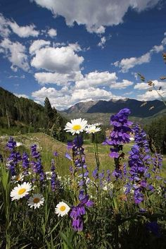 Beautiful Spring Day - Durango, Colorado by Visit Durango Beautiful World, Beautiful Places, Beautiful Pictures, Landscape Photography, Nature Photography, Jolie Photo, Spring Day, Nature Photos, Beautiful Landscapes
