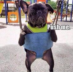 Funny Animal Pictures Of The Day – 21 Pics #dogs #dpgys #dogysmag