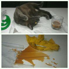 -Oh! Gatito bonito.. (1 minuto después) -Maldito bastardo hijo de una hiena!!! #cat #animals #love #sewing