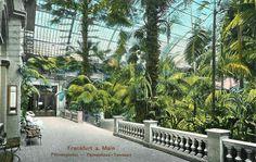 Glass Houses, Citrus Trees, Vivarium, Atrium, Conservatory, Vintage Postcards, 19th Century, Survival, Activities