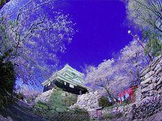 本当はこういう城郭・夜桜写真が撮りたかったのだけど。  ■浜松城
