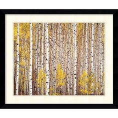 Amanti Art 'Aspen Grove, Colorado' by Christopher Burkett Framed Graphic Art