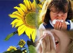 ¿qué es una reacción alérgica? AIRLIFE te contesta. Cuando una persona presenta alguna alergia ya sea al polvo, animales, alimentos etc. El organismo cree errónea mente que se trata de un invasor y en un intento por proteger al organismo libera histamina y otras substancas químicas en el cuerpo que desencadenan la reacción alérgica.