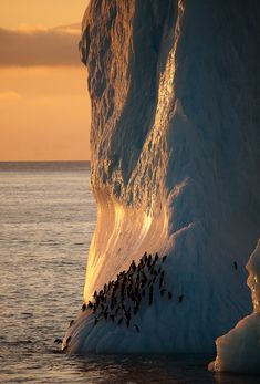 Chinstrap penguins on iceberg, Antarctica