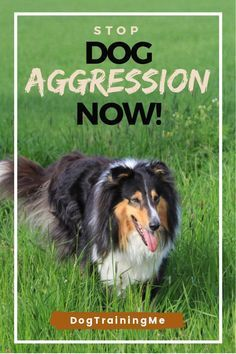 Pictures Of Different Types Of Aggressive Dog