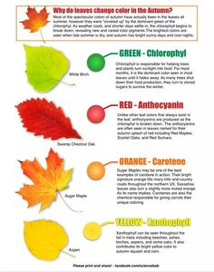 Why leaves change colours in the fall