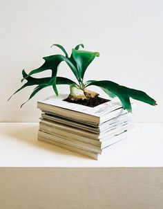 Interesting planter. And good use of those old magazines you never threw away.